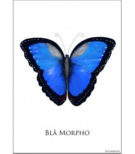 Fjäril Blå Morpho