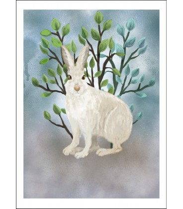 Vit hare
