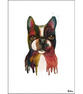 Bostonterrier akvarell
