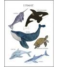 Havsdjur