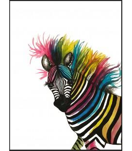 Zebra in colors