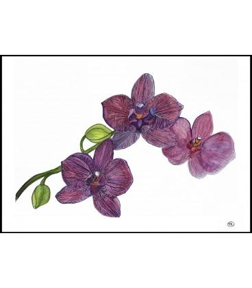 Botaniskt print Orkidéer